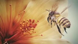 CGI 3D Animated Short HD   Bee    by Vladimir Loginov   YouTube